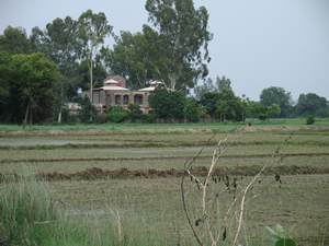 House Behind Paddy Fields