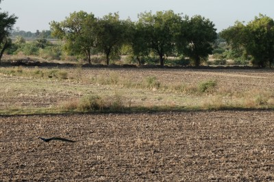 Barren Fields Pre Kharif Sowing