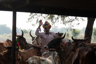 Mewa Lal & Cattle on Govardhan Pooja Day