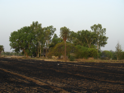 Charred Fields