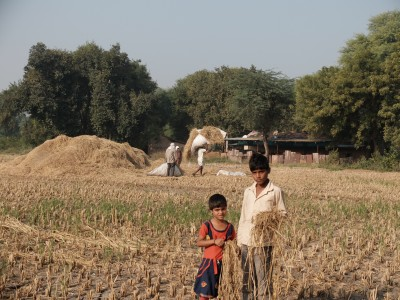 Children Gleaning Rice Nov 2019
