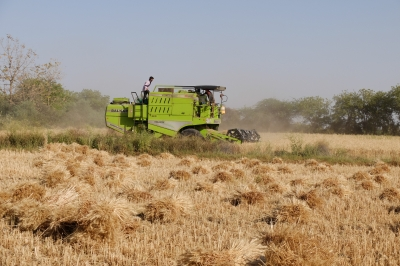 Wheat Harvested by Combine Harvester