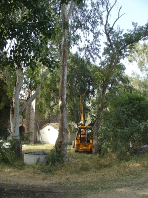 Crane Supporting Kainth Tree