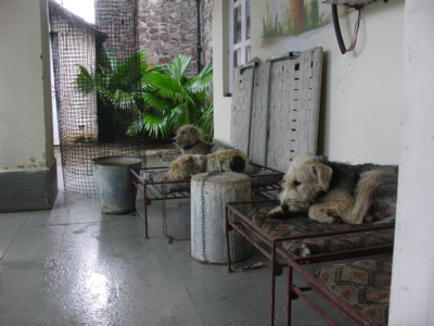 Dogs Rainy Day