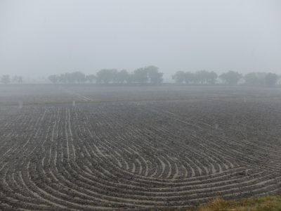 Furrows in the Rain