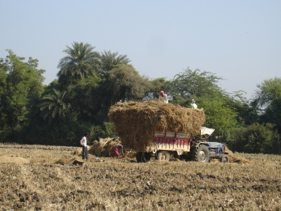 Loading the Pral (rice straw)