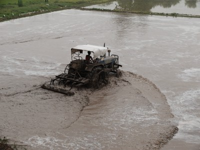 Churning the Soild Pre-Rice Transplanting