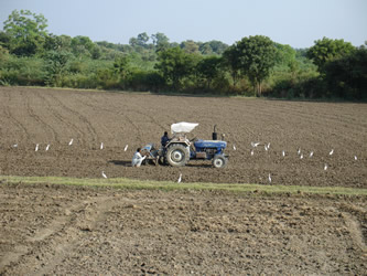 Sowing Mustard